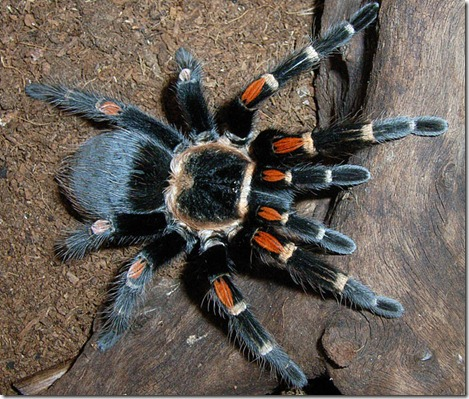 Tarantulas and all things not so tiny